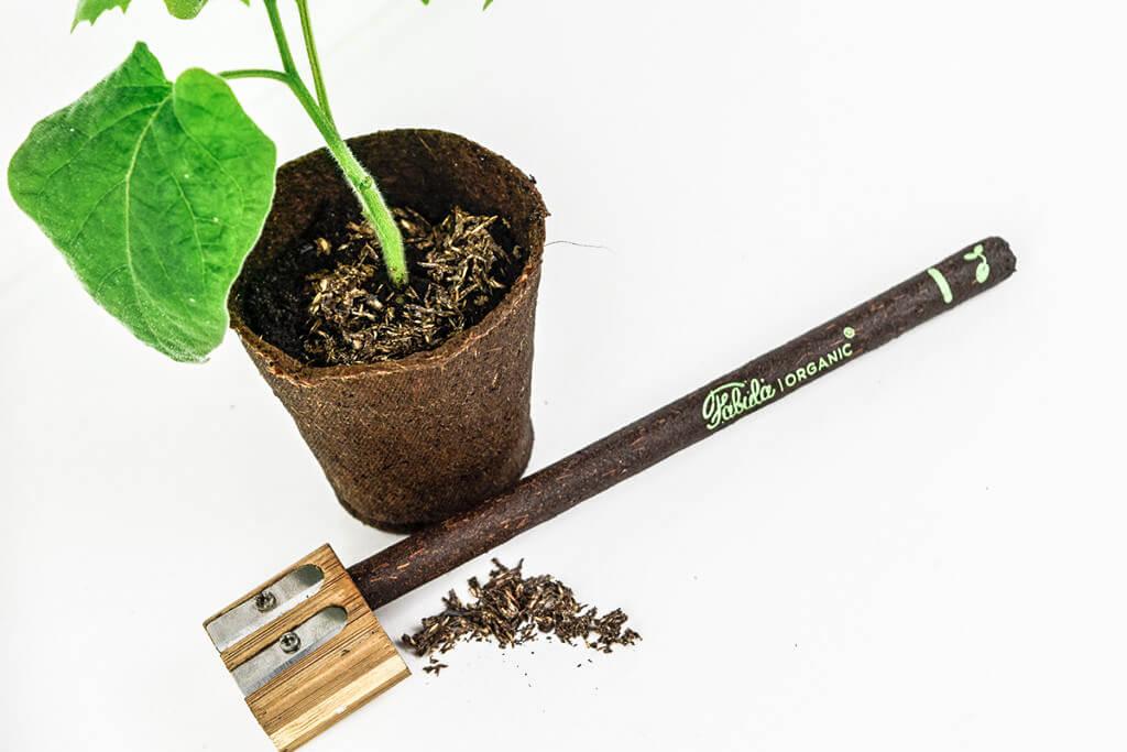 Fabula_plant